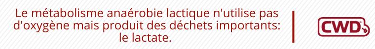 Le métabolisme anaérobie lactique n'utilise pas d'oxygène mais produit des déchets importants : le lactate.
