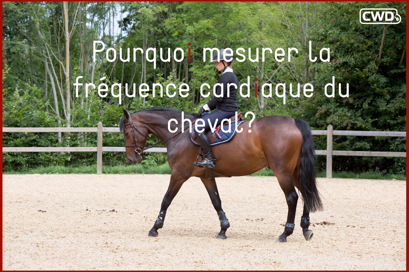 Pourquoi mesurer la fréquence cardiaque de son cheval ?