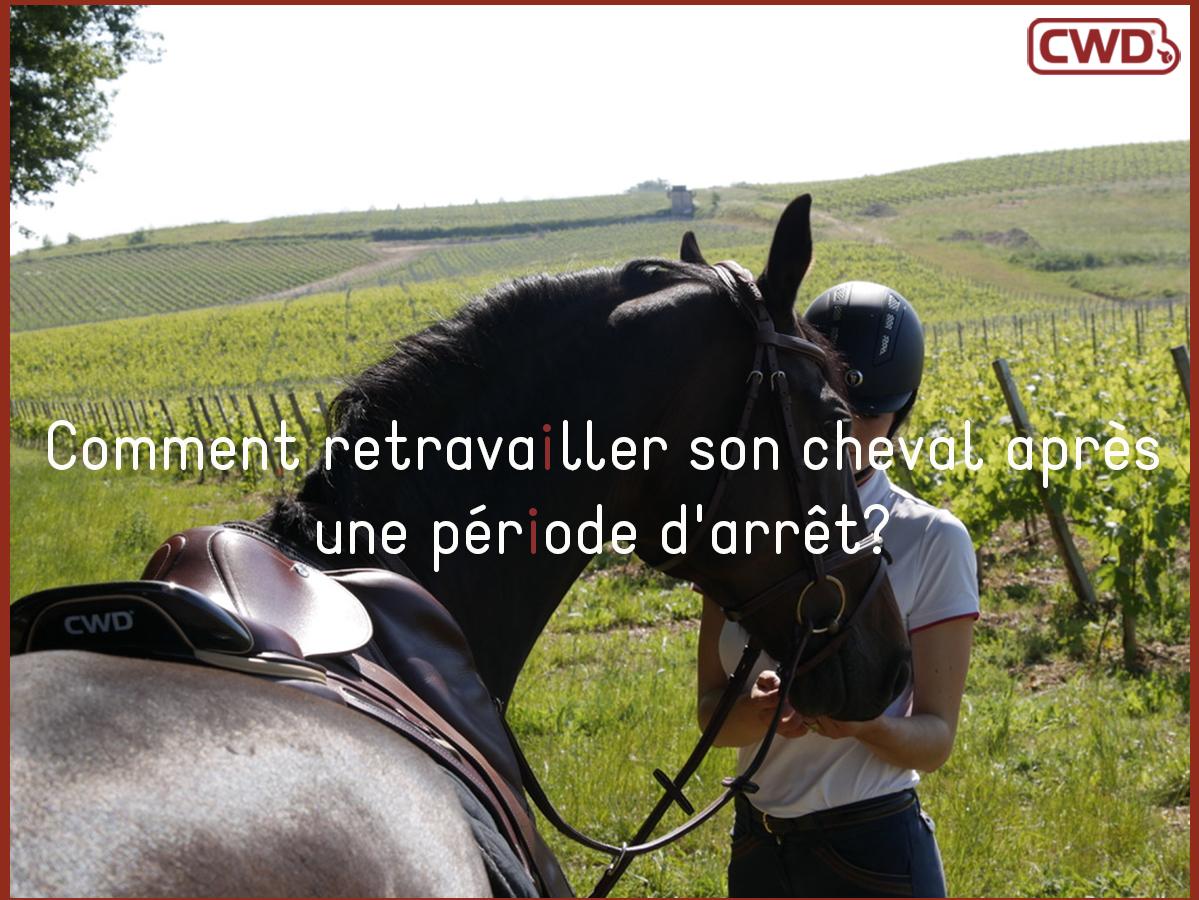 Comment retravailler son cheval après une période d'arrêt?