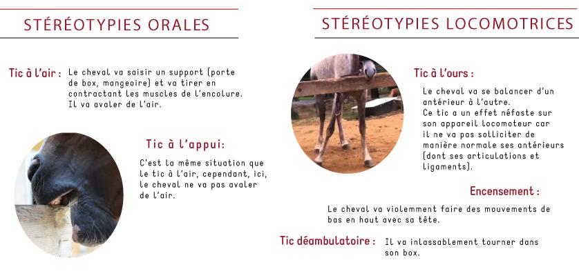 Stéréotypie orale et locomotrice