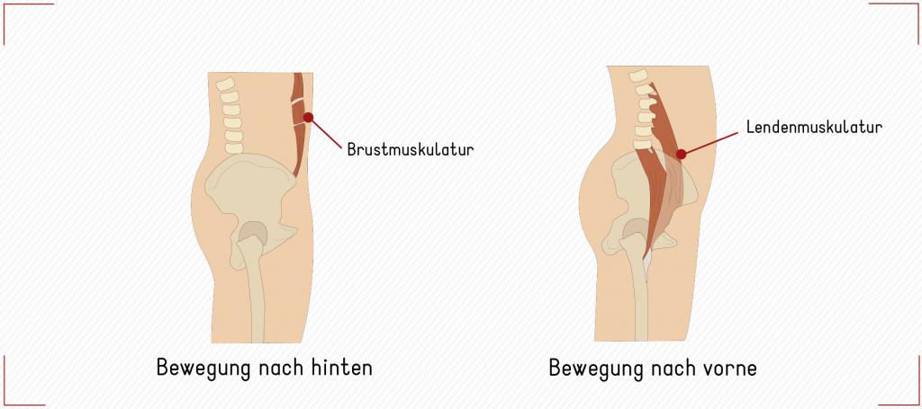 brust lenden muskulatur bewegungen becken