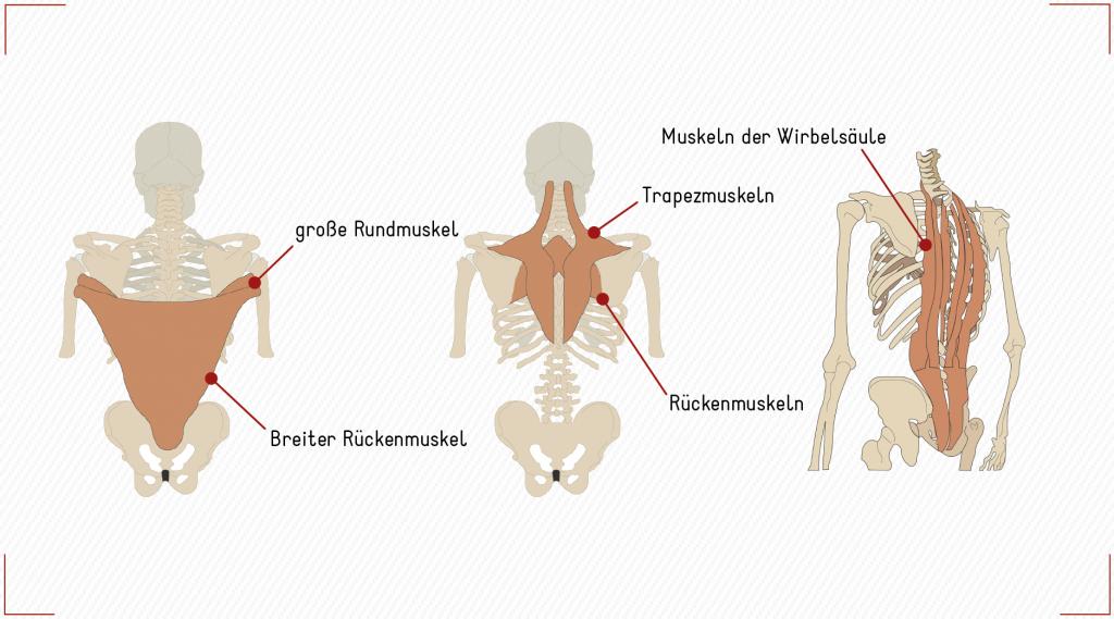 Muskeln des Rückens reiter