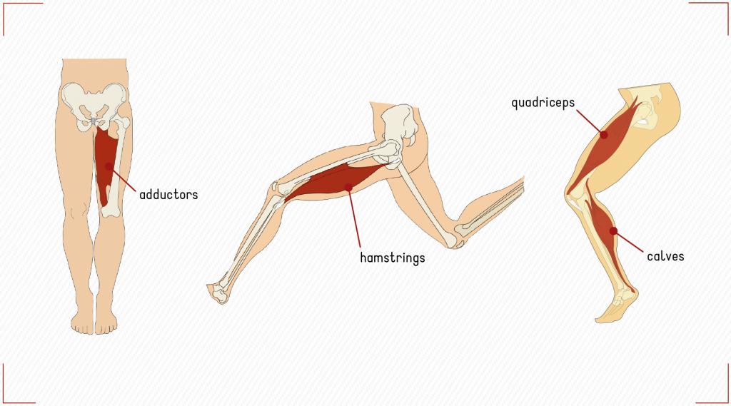 leg muscles role horse-riding